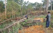 Lâm Đồng: Đình chỉ công tác 1 phó chủ tịch xã để mất rừng gần trụ sở