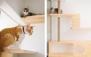Căn hộ thân thiện dành cho những người yêu mèo