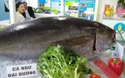 Bị ách nguyên liệu ở cảng, doanh nghiệp hải sản kêu cứu