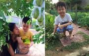 Phát thèm khu vườn sai trĩu quả của diễn viên Lê Phương
