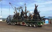 """Nhiều cây """"tiểu quái thú"""" đi bằng đường thủy ra Bắc"""