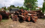 """Vụ trùm gỗ lậu Phượng """"râu"""": Không kỷ luật lãnh đạo Bộ đội Biên phòng Đắk Lắk"""