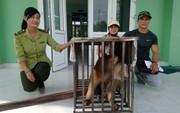 Nhóm thanh niên góp tiền giải cứu cá thể khỉ quý hiếm