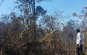 Đốt nhằm chống cháy nhưng lại để cháy luôn 10 ha rừng, xong giấu nhẹm