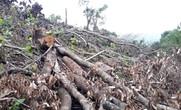 Trầy trật thu hồi đất rừng