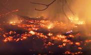 Hàng trăm người trắng đêm chữa cháy rừng ở Quảng Bình
