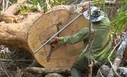 Hơn 28.500 tỉ đồng bảo vệ rừng Tây Nguyên