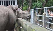Buôn lậu ngà voi, sừng tê giác