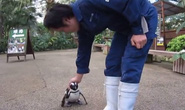 Bé chim cánh cụt cuồng yêu