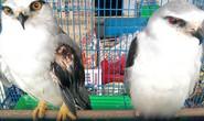 Vô tư buôn bán động vật hoang dã