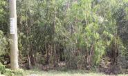 Thi thể người đàn ông phân hủy mạnh trong rừng