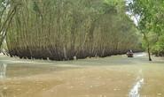 Ngao du mùa nước nổi đồng bằng
