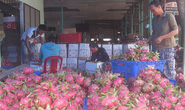 Thanh long Việt Nam đi Tây: Không dễ!