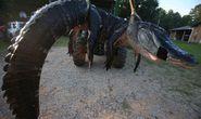 Bắt được cá sấu khổng lồ 450 kg tại Mỹ