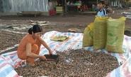 Biến đổi khí hậu thách  thức ngành nông nghiệp