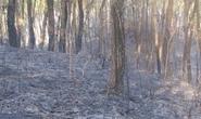 Hạt phó hạt kiểm lâm tử vong vì chữa cháy rừng