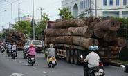 Bắt 2 xe chở gỗ vượt trên 100% tải trọng