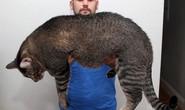 Tranh nhau mua mèo quái vật dài gần 1 mét