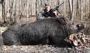 Làm thịt lợn nặng 230 kg để ăn cả năm