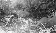 Có động vật tưởng tuyệt chủng 85 năm được phát hiện ở Thanh Hóa