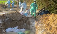 Dịch cúm gia cầm áp sát Thủ đô Hà Nội