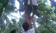 Hái dừa trong đêm, 2 thanh niên bị điện giật chết