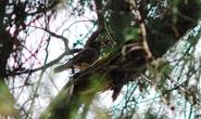 Chim quý rủ nhau về làm tổ ở Đại học Đà Lạt