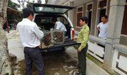 Khẩn cấp cứu hộ cho 6 động vật hoang dã cực kỳ quý hiếm