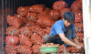 Khoai tây Trung Quốc tràn ngập chợ Nông sản Đà Lạt