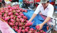 Trung Quốc nhập khẩu trái cây nhiều nhất từ Việt Nam