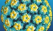 Nhiễm HPV đường miệng kéo dài hơn ở đàn ông cao tuổi