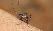 Brazil cho lưu hành vắc-xin sốt xuất huyết