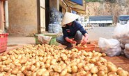 Khó cấm cửa khoai tây Trung Quốc