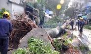 Phó công an xã bị cây cổ thụ ngã đè chết