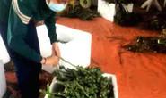 Nông dân có lợi khi thương lái mua cau non bán sang Trung Quốc