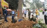 Hà Nội công bố kết luận thanh tra vụ chặt cây xanh