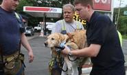Chú chó xả thân lao vào xe buýt cứu chủ nhân