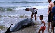 Cá voi nặng 250 kg mắc lưới ngư dân