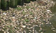 Cá lại chết dày đặc kênh Nhiêu Lộc