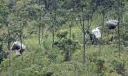 Tìm cách vượt biên sang Việt Nam, 2 người Duy Ngô Nhĩ bị bắn chết