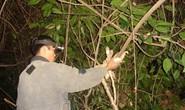 Đi săn, bị cành cây chọc vào mắt tử vong