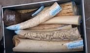 Bắt vụ buôn lậu lớn sừng tê giác, ngà voi Châu Phi tại Nội Bài