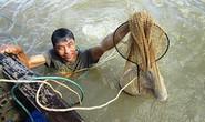 Theo thợ săn chui xuống đáy sông mò cá ngát