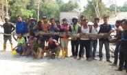 Con trăn dài 8 mét ở Malaysia chết bên ổ trứng