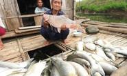 Cá chết hàng loạt trên sông: Nhà máy trả tiền đền bù cho dân