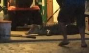 Tá hỏa phát hiện cá sấu nằm chờ trong nhà để xe