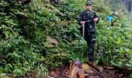 Dùng chó nghiệp vụ truy lùng nghi can gây thảm sát ở Lào Cai