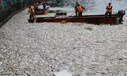 Công bố 4 nguyên nhân cá chết hàng loạt tại các hồ ở Hà Nội