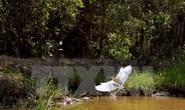 Phát hiện nhiều loài động vật quý hiếm ở U Minh Hạ