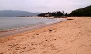 Cá chết khiến 30% khách hủy tour đến Quảng Bình